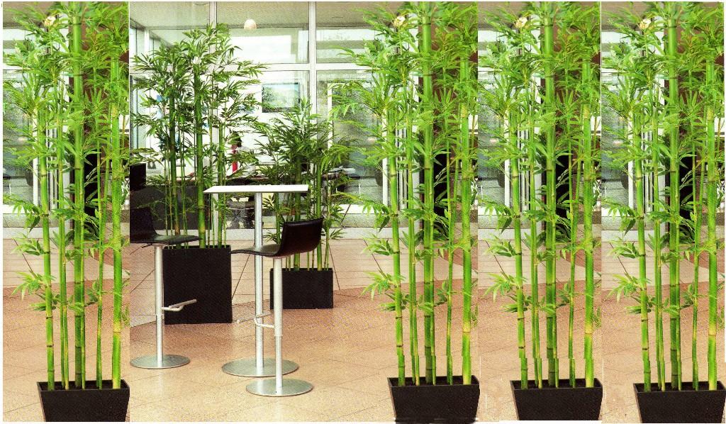 Pianta rampicante da interno latest piante rampicanti for Piante rampicanti finte
